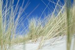Beach northsea
